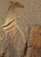 Pagine di pietra: i graffiti preistorici del Wadi Bergiug (Libia)