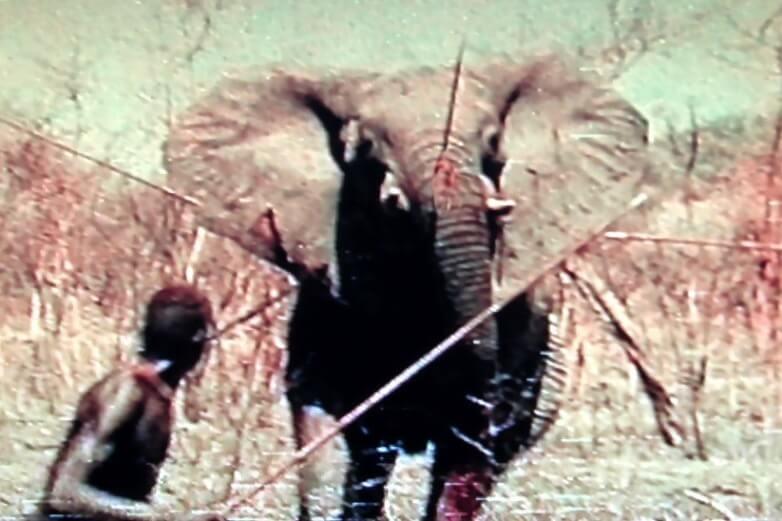 museo-castiglioni-varese-caccia-elefanti-dinka